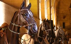 Musée du cheval à Chantilly