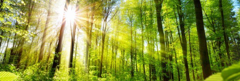 Découverte Nature à Chantilly